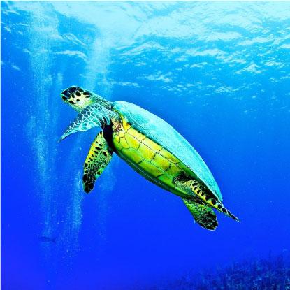 Dive Florida | Scuba Certification & Dive Shop Sarasota FL
